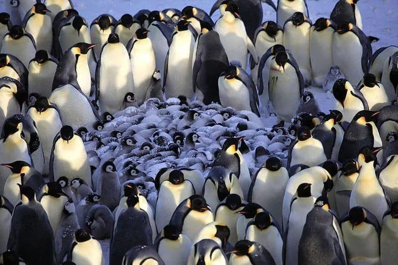 Уникальные фотографии из мира животных