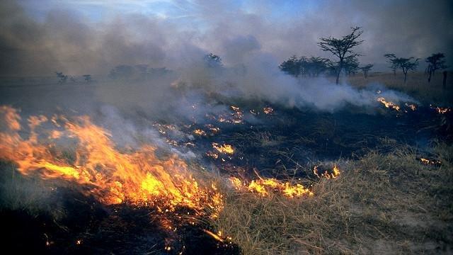 Пожары преобразили первобытных людей