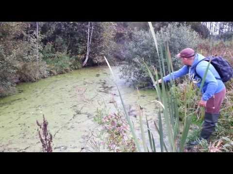 Ловля спиннингом в болоте
