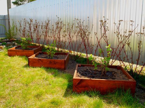 Грядки-коробочки для черной смородины и крыжовника