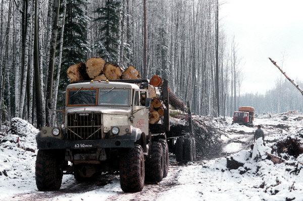 """Дальневосточный лес """"весь спили китайцы"""". Факты"""