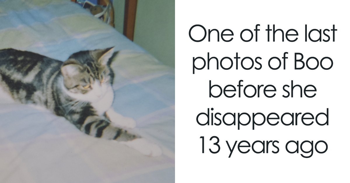 17-Year-Old Cat Returns Home After Going Missing 13 Years Ago