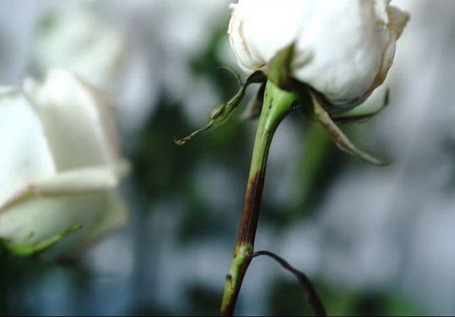 Реакция цветка на соду