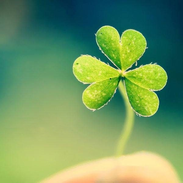 Растения-талисманы, которые помогут сохранить любовь и принесут счастье в дом