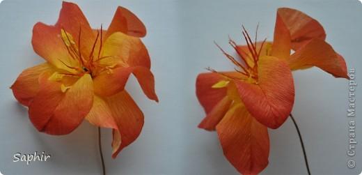 Поделка изделие Бумагопластика цветы из гофробумаги  мастер-класс Бумага гофрированная фото 7