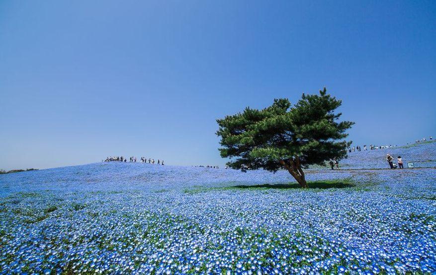lugares-increibles-japon-12