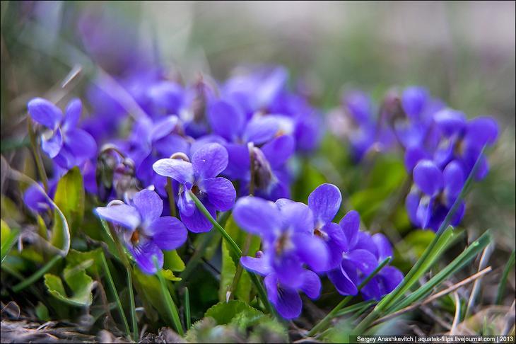 Как цветут Крымские горы — весенние цветы на их склонах весной