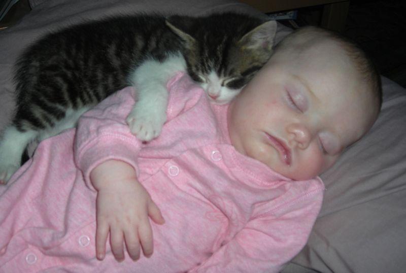 CatsGoldenHearts29 Почему мы любим кошек