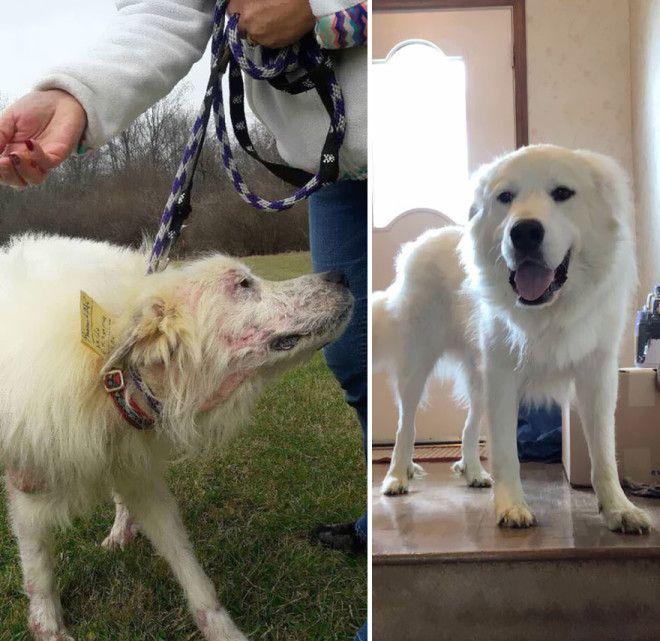 30 фото домашних животных до и после того как их усыновили