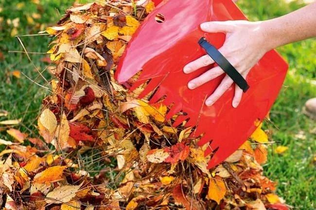 Вот почему осенью нельзя обрывать листья у молодых деревьев