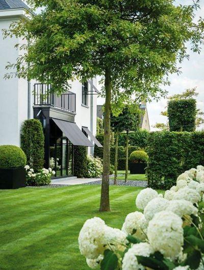Пейзажная живая изгородь как украшение вашего дома. Гортензия