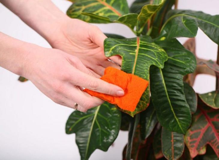 Каких комнатных растений стоит опасаться