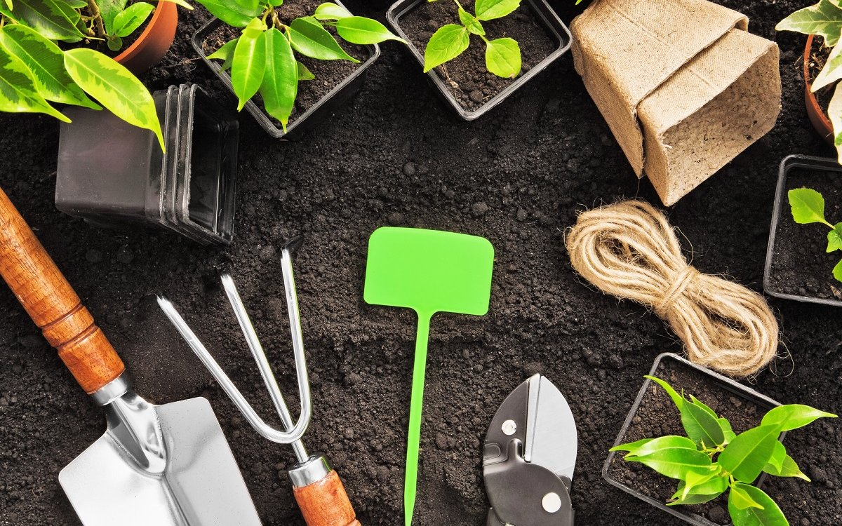 : Gardening tools and plants on land
