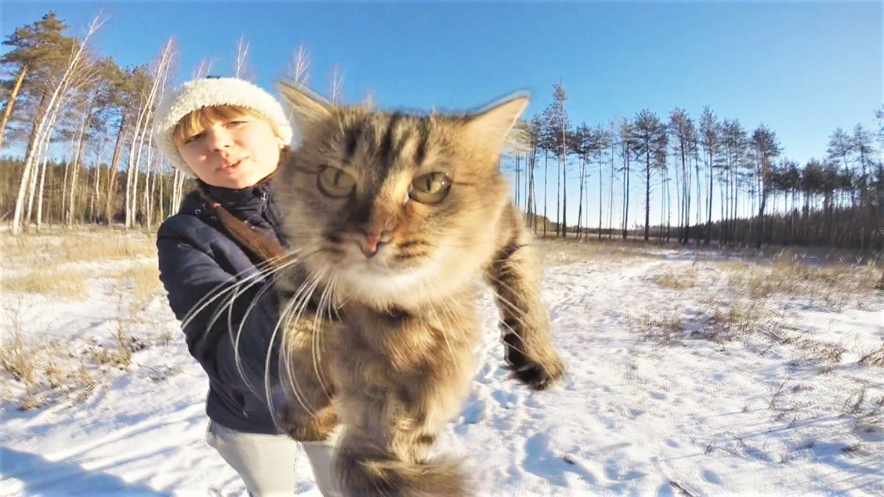 Видео с животными в поддержк…