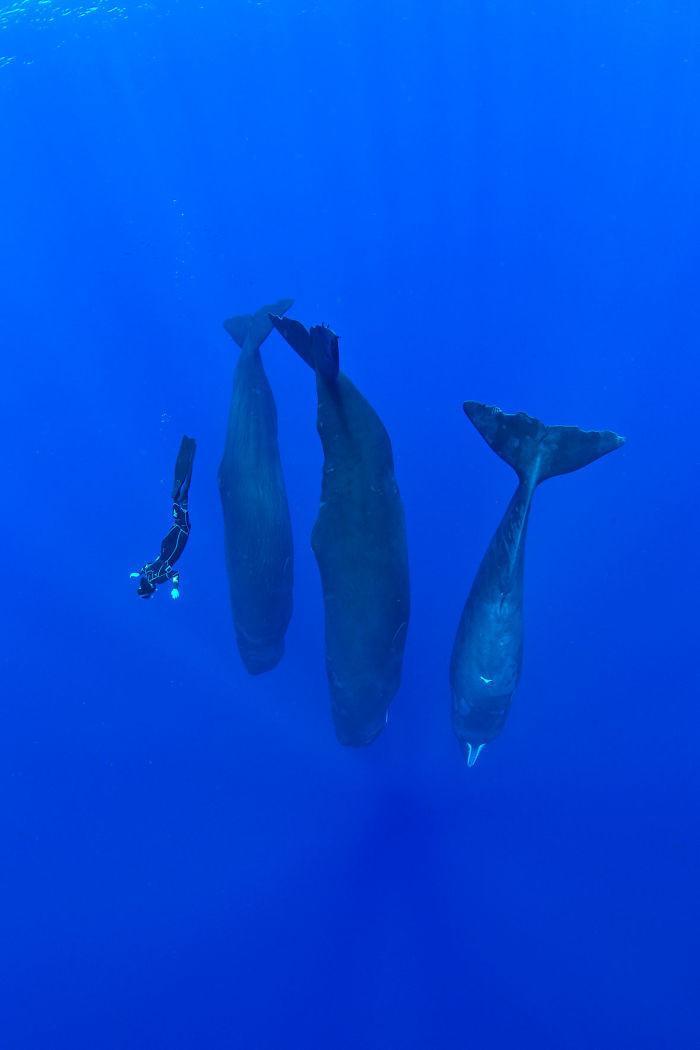 Уникальные фото спящих кашалотов Кашалоты, видео, интересно, океан, природа, спящие гиганты, уникально, фото