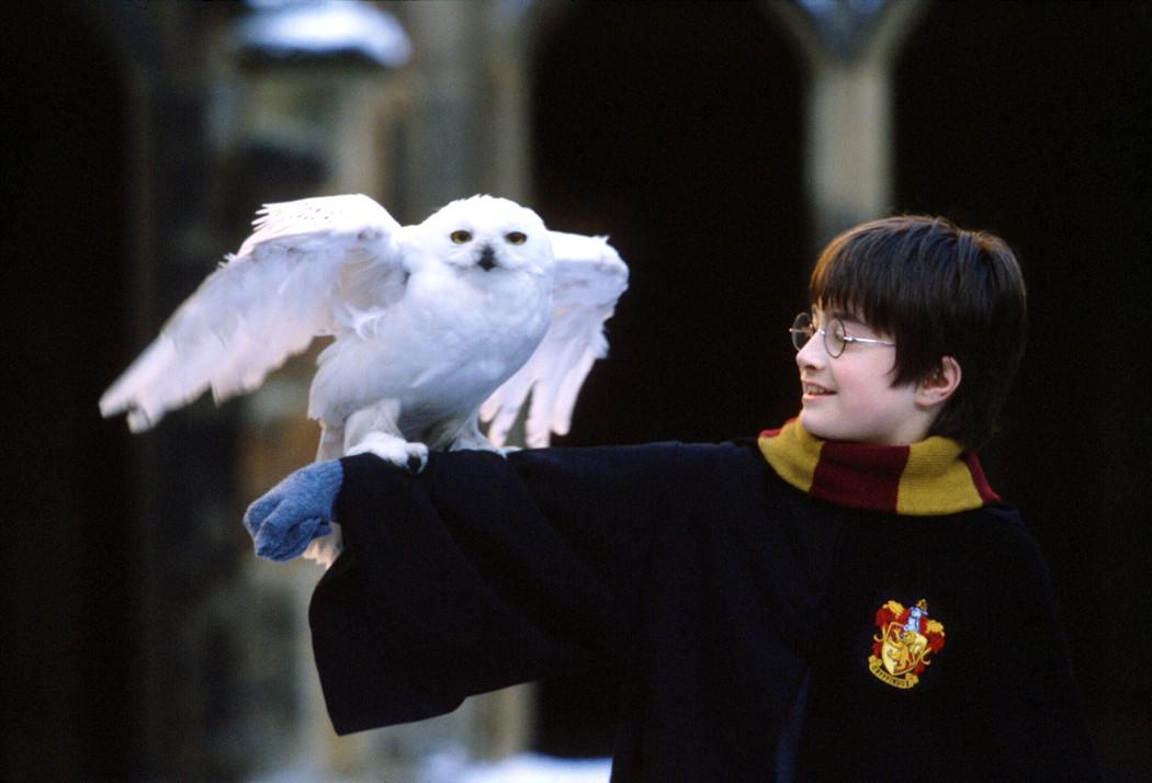 Гарри Поттер и семейные ценности: почему ревнители традиций должны обожать книги Роулинг