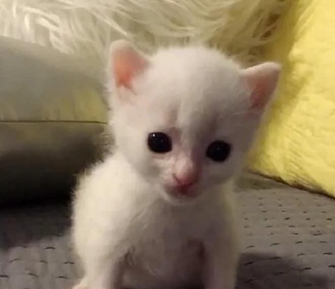 Одинокий глухой котенок нашел себе приятелей, которые тоже ничего не слышат, но понимают друг друга