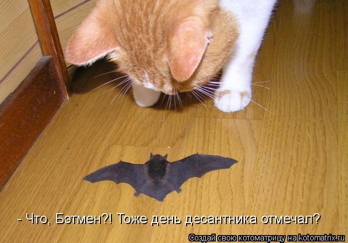 Котоматрица: - Что, Бэтмен?! Тоже день десантника отмечал?