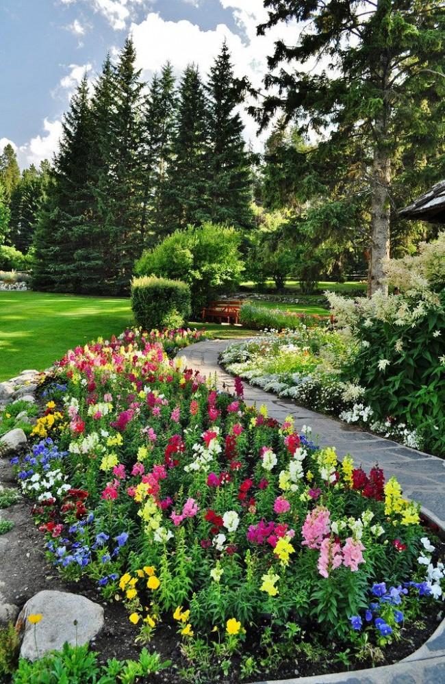 Яркие разноцветные антирринумы- красивая окантовка садовых дорожек