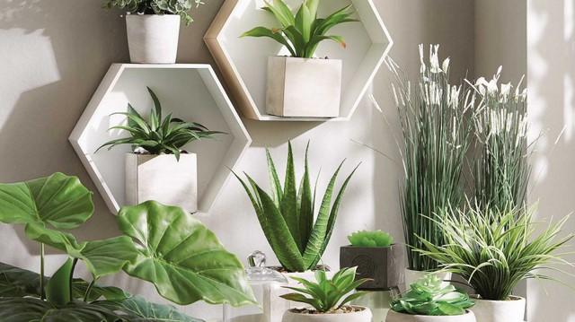 Растения в интерьере — зачем их иметь?
