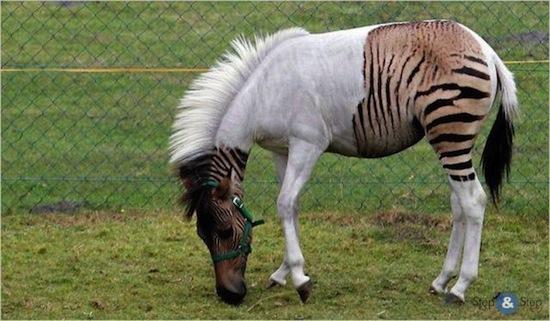 Пять самых удивительных пород животных, выведенных человеком