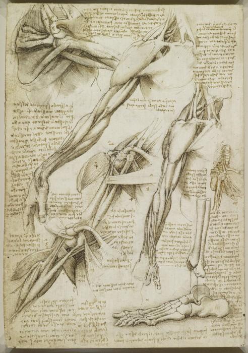 Анатомические эскизы, в которых подробно описаны все действия Леонардо да Винчи.