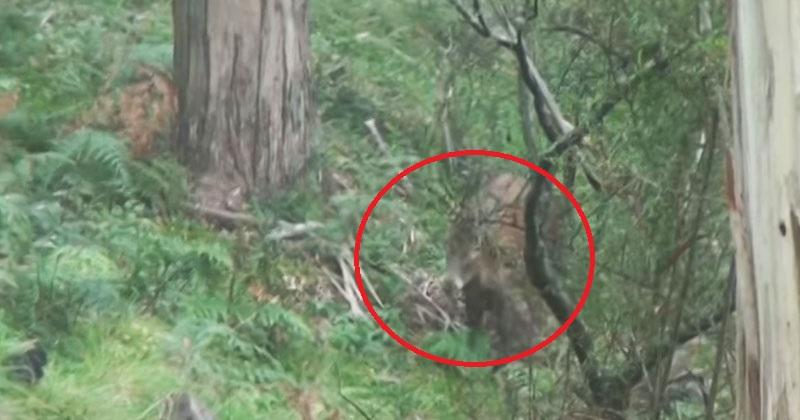 Он снимал природу, когда из леса вышло это животное. Такое встречается крайне редко!