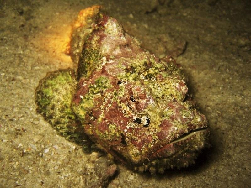 Бородавчатки животные, интересное, море, опасность, подборка, факты, фауна