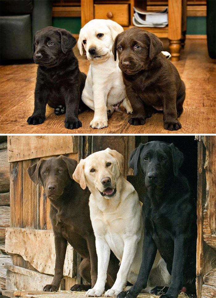 Растущие вместе: до и после