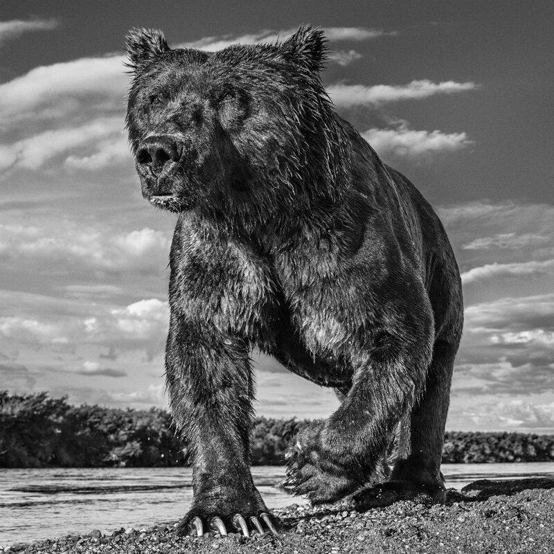 «Я гонялся за этим леопардом полтора часа!»: история создания легендарных кадров
