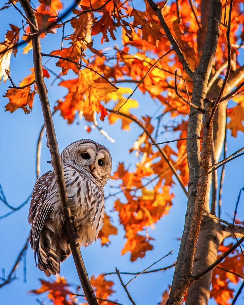 Очарованные осенью