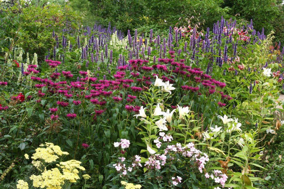 Цветы кустарники для сада и огорода многолетники фото с названиями