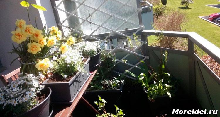 Облагораживаем балкон с помощью цветов