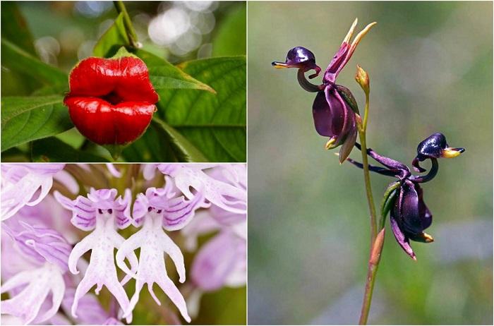 14 самых необычных орхидей, которые поражают своей красотой