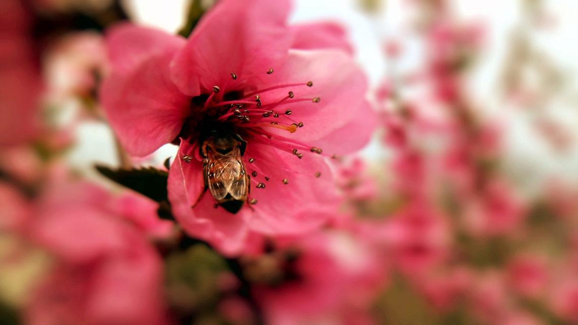 Для тех, кто привык обвинять других — притча о пчеле и мухе