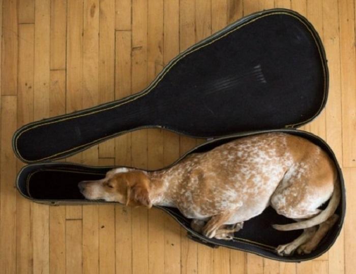 20 уснувших в самых неожиданных местах и положениях животных