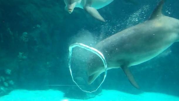 plus.google.com-dolphin-bubble-rings
