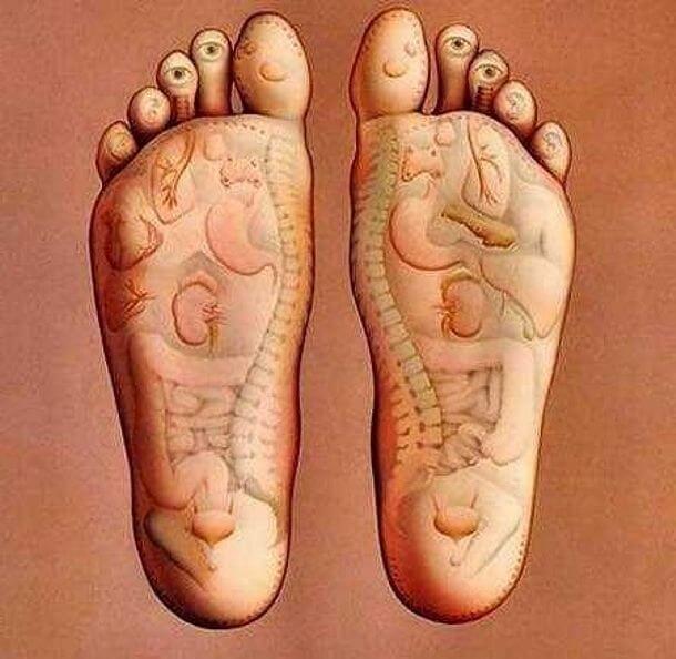 Влияние массажа и самомассажа на внутренние органы и системы организма