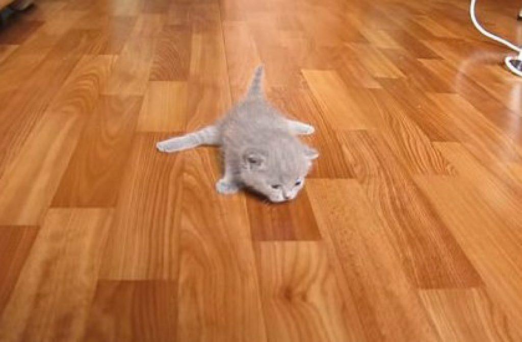 Очаровательные котята делают свои первые шаги