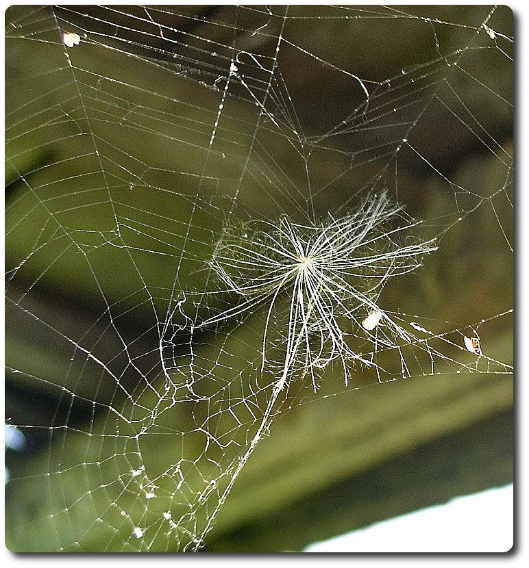 паук ушел