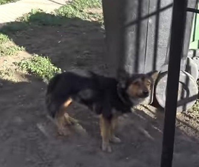 Хозяин приобрел новую собаку, и бывший питомец оказался на улице, наполовину слепой