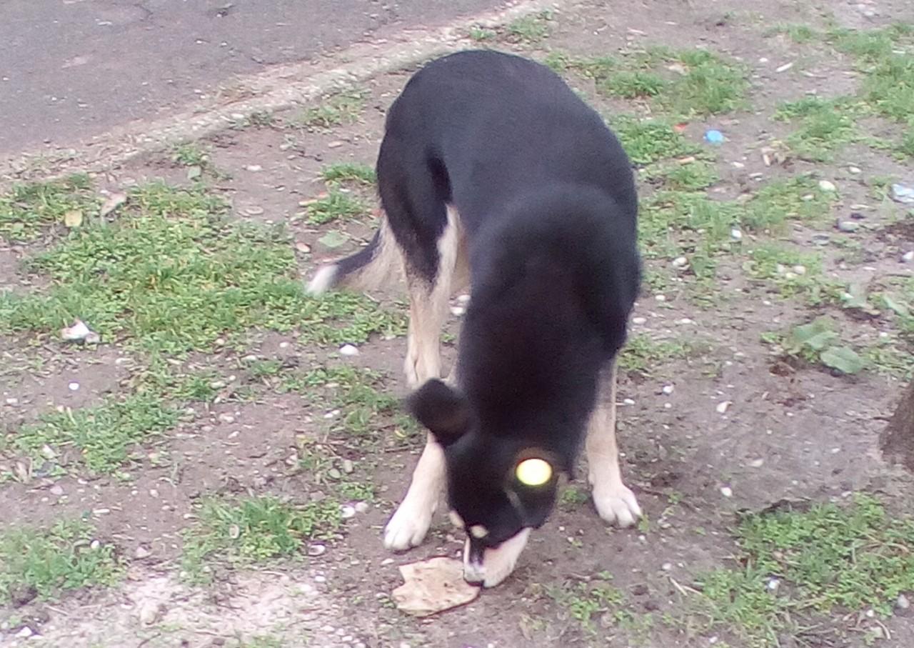 Обмен с собакой