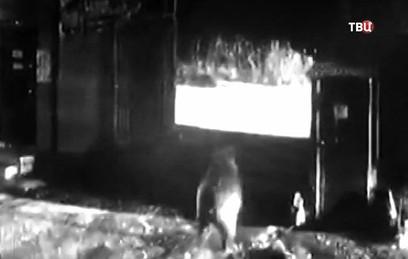 Гуляющий по рынку на Камчатке медведь попал на видео