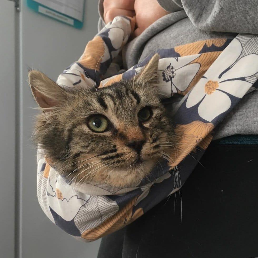 Дикий котенок съежился в углу. Он шипел на каждого, кто пытался к нему подойти