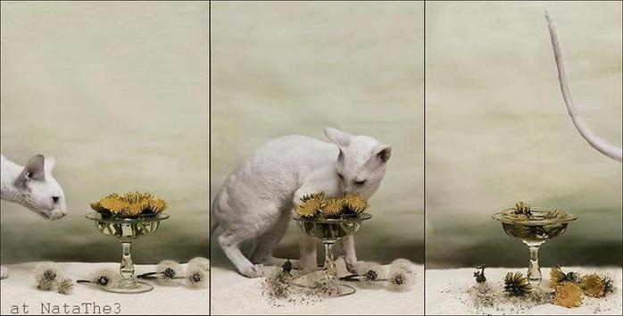 Кото-натюрморты