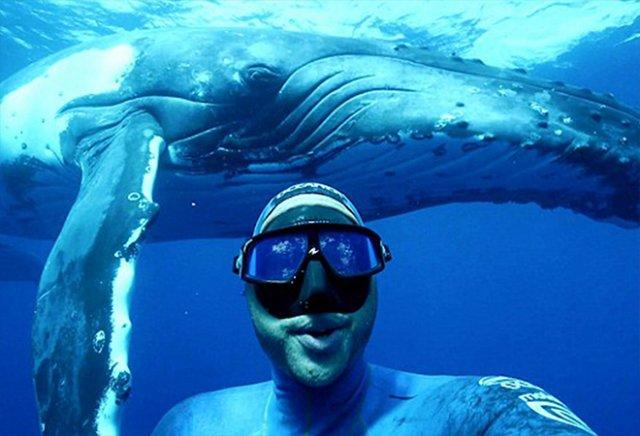 Дайвер сделал крутое селфи с горбатым китом