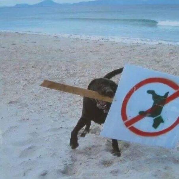 Животные-бунтари, которым плевать на все правила