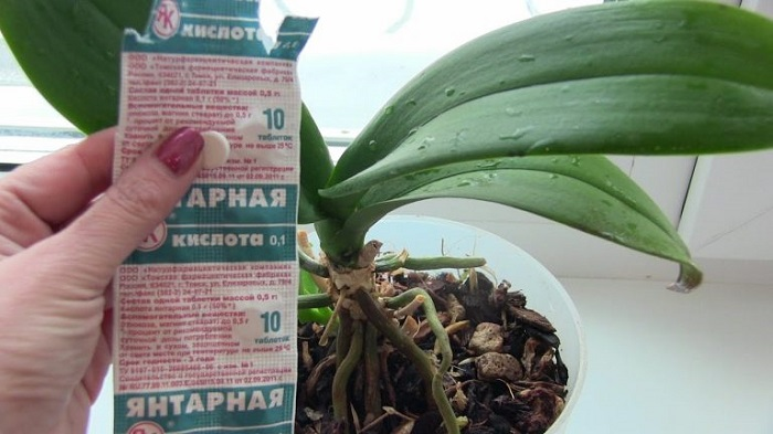 янтарная кислота для растений как разводить