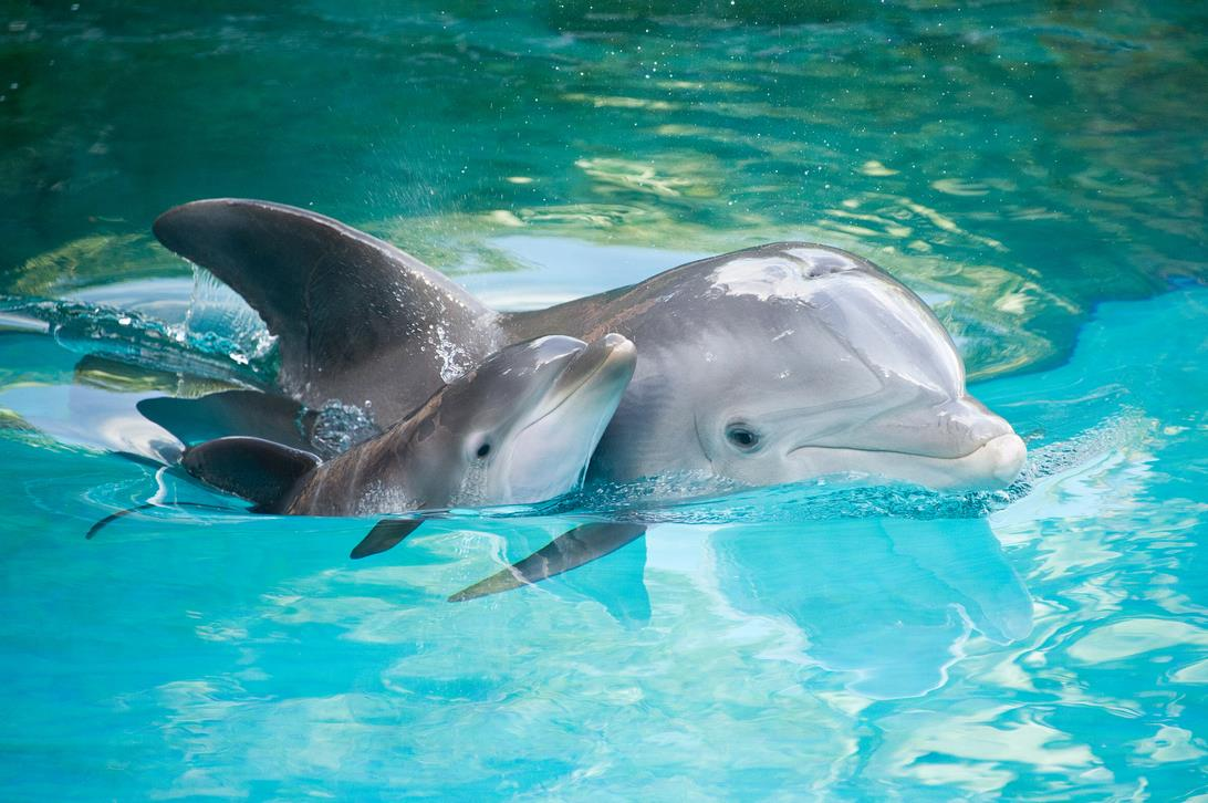 25 поразительных и необычных фактов о дельфинах