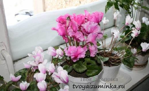 Как приготовить домашнюю подкормку для комнатных цветов
